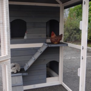 Hühnerstall Kaninchenstall Twin