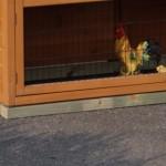 Fundamentbalken für Kaninchenstall - Hühnerstall Prestige Large mit Auslauf