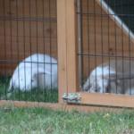 kaninchenstall mit festen Verschlüsse