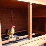 Hühner schlafteil mit sitzstangen